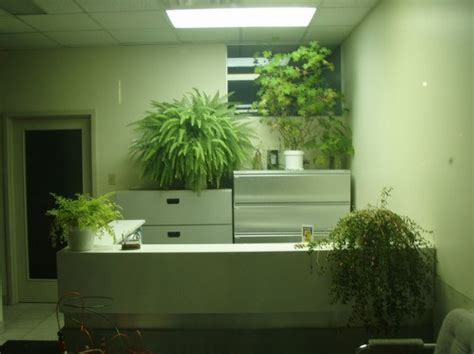 plants for desk studies prove that desk plants can improve worker