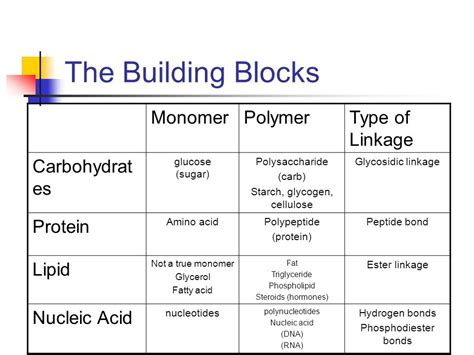 carbohydrates building blocks the macromolecules chapter ppt