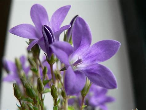 names of purple purple flowers names and photos