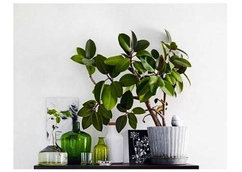 great indoor plants great arrangement indoor plants houseplants pinterest