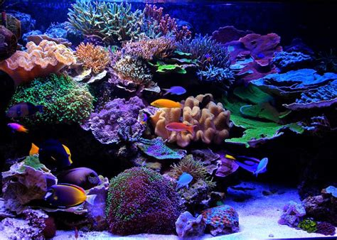 Reef Aquascape by Pin By Beck Designs On Aquarium Fish Tank Aquascape Aquasca