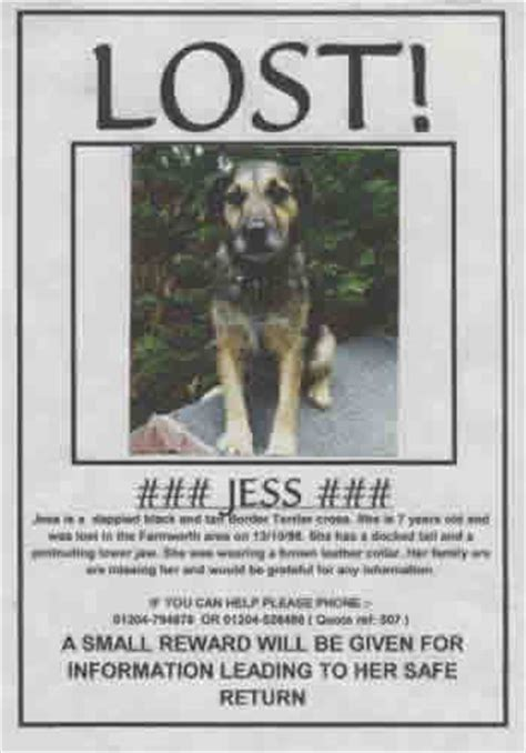 lost poster sle pet lost poster