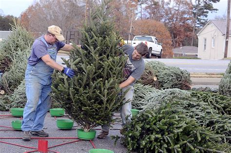 christmas tree time hdr hickory daily record featured