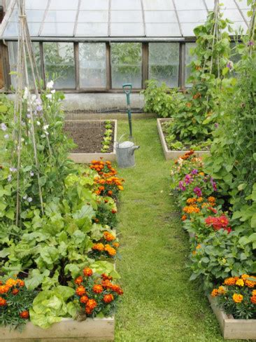 what should i grow in my vegetable garden athens farm garden companion planting