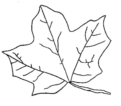 printable coloring pages leaves leaf coloring pages coloring pages to print