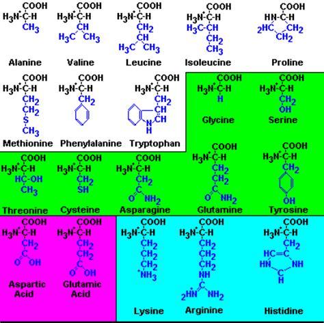 clasificacion de los aminoacidos segun sus cadenas laterales proteinas carbohidratos lipidos y proteinas