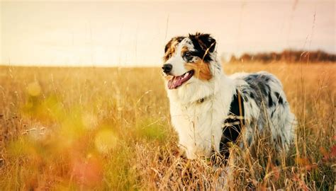 beautiful breeds 35 most beautiful breeds in the world