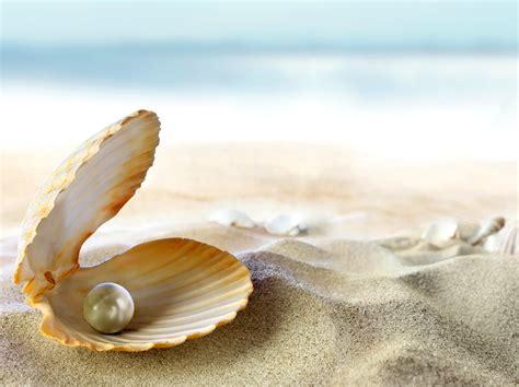 shell wallpaper seashell wallpaper wallpapersafari