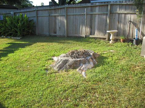 build pit around tree stump diy pit tutorial