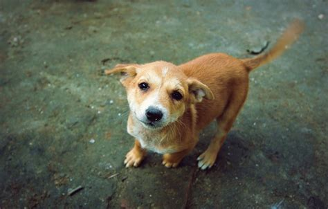 wagging puppies dogs in alignment with earth s magnetic field study finds pbs newshour