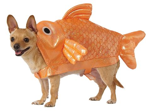 puppy fish in fish costume www imgkid the image kid has it