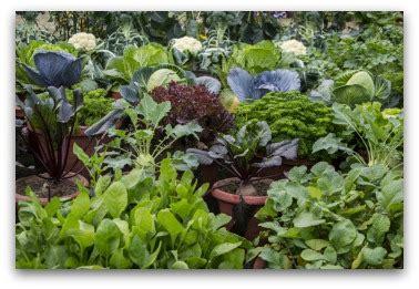 container vegetable garden plans  ideas