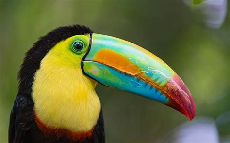 bird breeds top 10 most colourful and tropical bird species