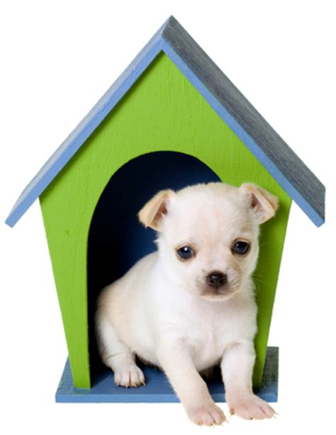 Puppy S At Home by Teacups Puppies And Dogs New Home