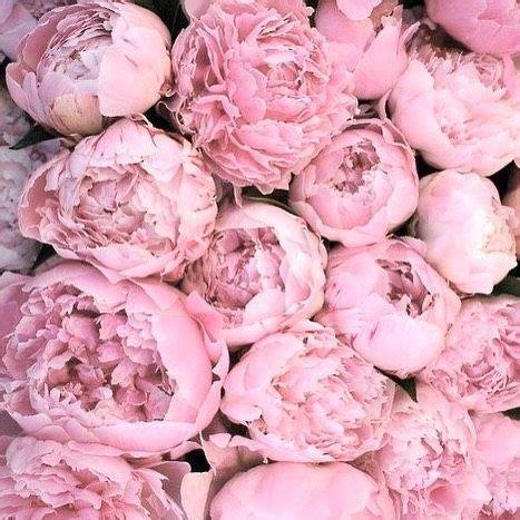 Instagram Pinkpeonies love bellamumma instagram pinterest pink peonies and love