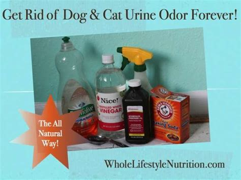 getting rid of dog smell in house 37 best images about good ideas on pinterest