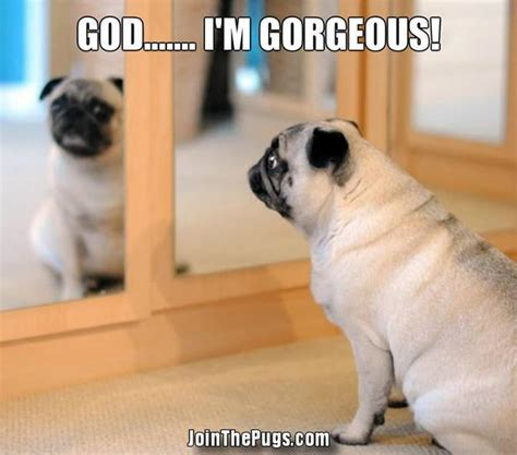 god pugs join the pugs gt narcissus pug