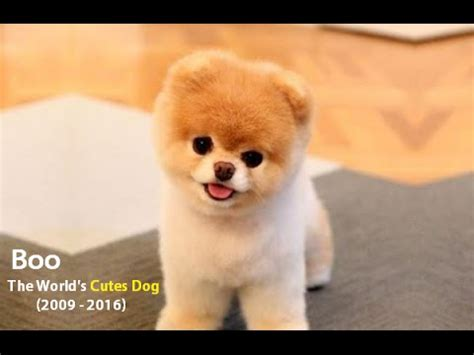 boo the cutest in the world boo the world s cutest compilation 2009 2016