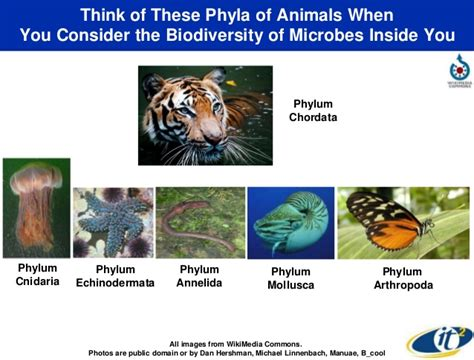phylum annelida an overview of biodiversity discovering the other 90 of our human superorganism
