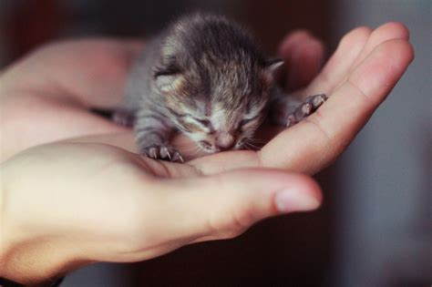 newborn kittens 12 kitten chrome themes desktop wallpapers more for