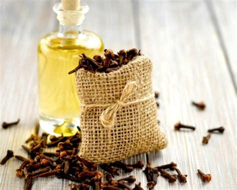 Minyak Cengkeh herba minyak cengkeh untuk mengobati gigi berlubang