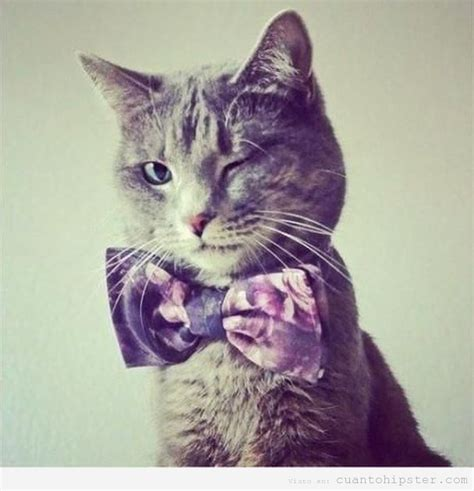 imagenes hipster gatos gato hipster cu 225 nto hipster