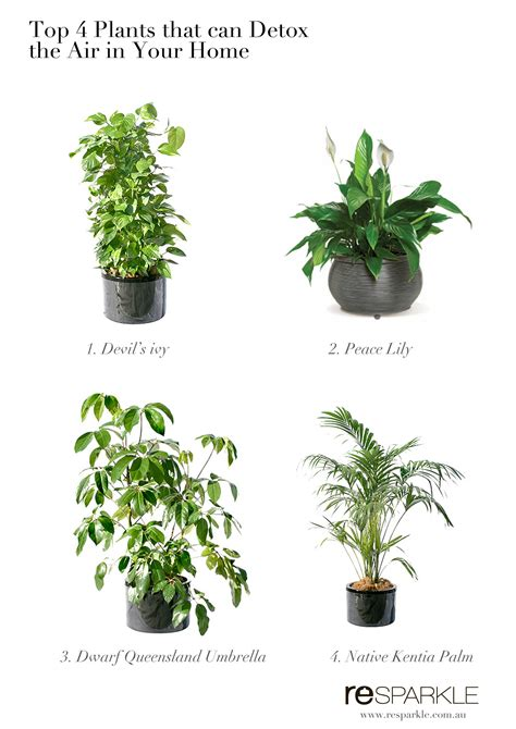 best home plants top 4 plants that can help detox indoor air at home