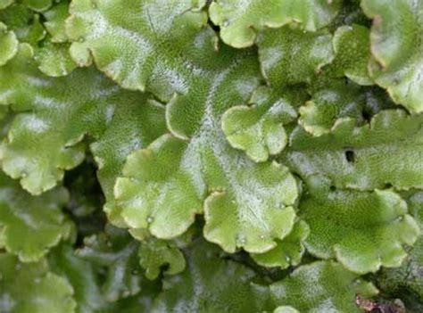 stephani puspita dunia tumbuhan