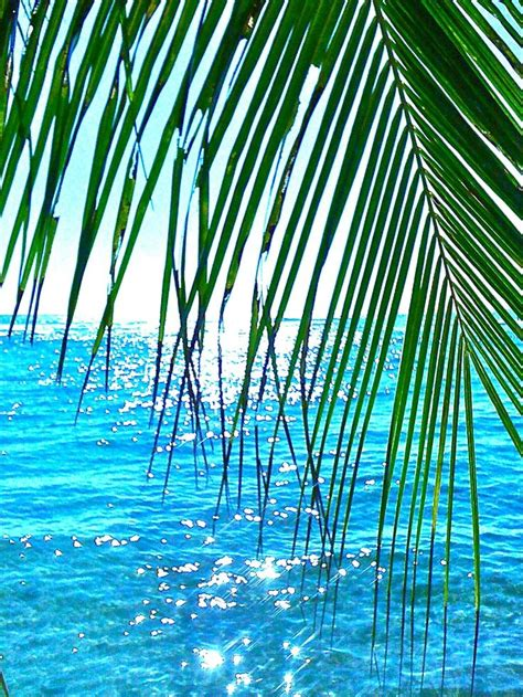 tropical island mcgeary media 17 best images about hawaii other tropical islands