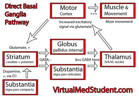 direct pathway of movement
