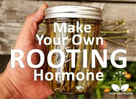 grow your own hrt sprout hormone rich greens in only two minutes a day books 1000 ideas about rooting plants on raised