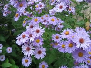 fichier fleurs de jardin ni 232 vre jpg wikip 233 dia