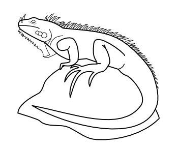 imagenes para colorear iguana iguanas para dibujar imagui