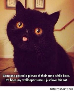 Funny Black Cat Memes - quotes about black cats quotesgram