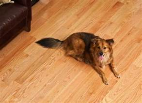 Best Flooring With Dogs Best Flooring For Dogs Cats And Bob Vila