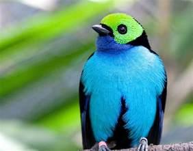 birds pictures birds of paradise amazon jhang tv