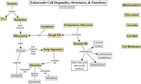 concept map cell nucleus eukaryotic cell