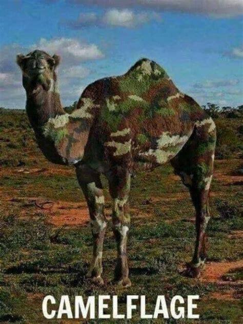 Camel Memes - camelflage meme collection