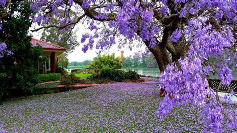 Purple Tree Wallpapers Wallpaper Cave Purple Garden Flowers
