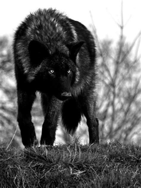 The Kings Mate -Werewolf King #1- - Chapter 5: - Wattpad