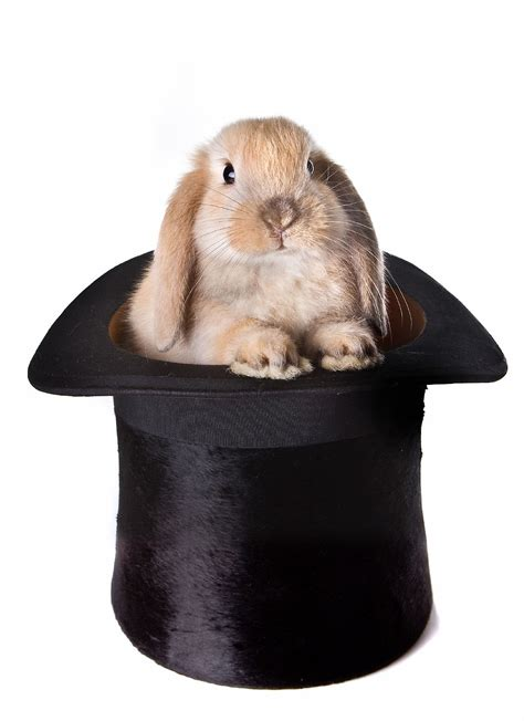 Top Rabbit With Hat cesar milan and the principle of parsimony