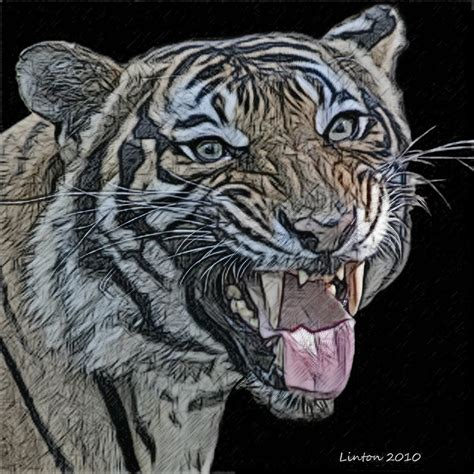 colored charcoal colored charcoal tiger photograph by larry linton
