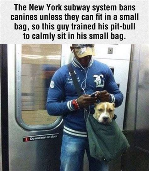 Dogs That Fit In Your Purse by Subway Bans Dogs On Subway Unless They Fit In A Bag
