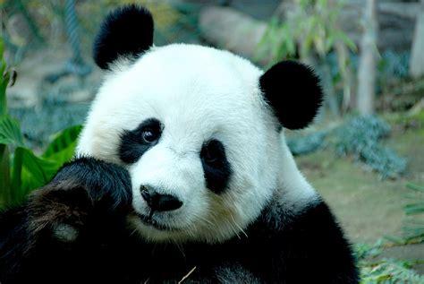 imagenes animales y plantas en peligro de extincion ejemplos de animales en peligro de extinci 243 n