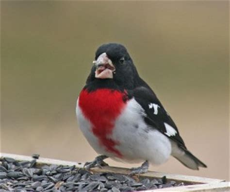backyard birds of indiana ucb newsletter