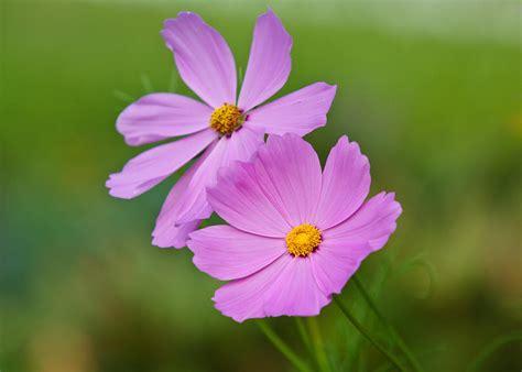 light purple flowers image flowers in bloom green image gallery light purple flowers