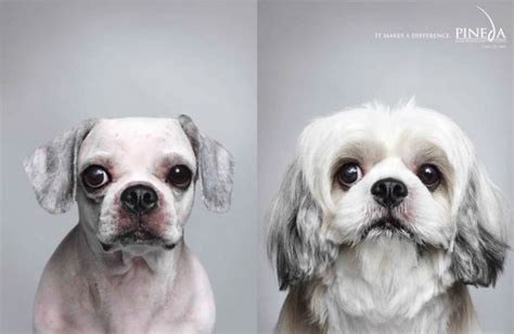 Dogs Motto 30 advertisements featuring dogs idevie