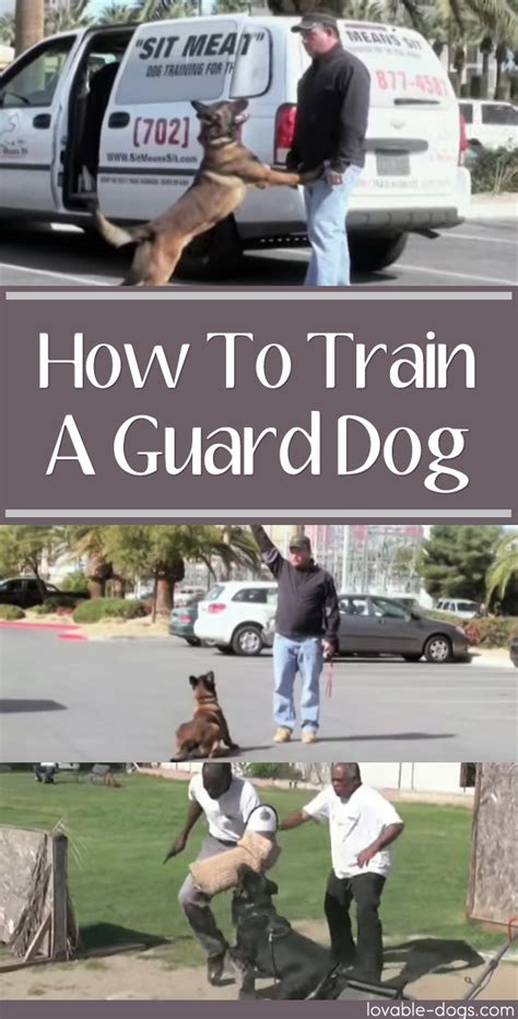 how to a guard puppy lovable dogs how to a guard lovable dogs