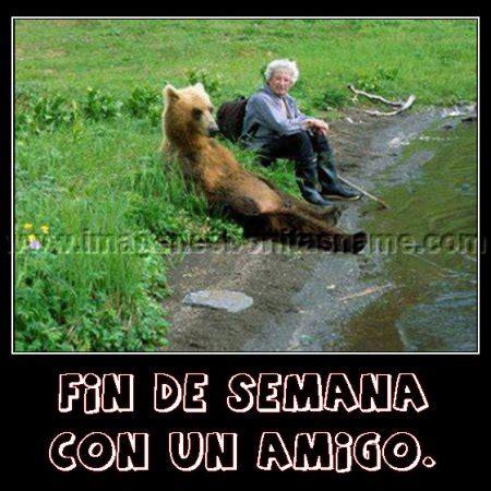 imagenes bonitas osos imagenes bonitas oso descansando imagenes bonitas