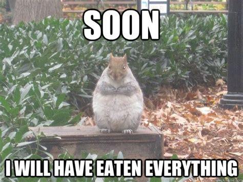 Dead Squirrel Meme - fat squirrel meme